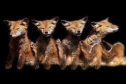fox : future